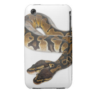 Two headed Royal Python or Ball Python - Python Case-Mate iPhone 3 Cases