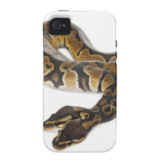 Two headed Royal Python or Ball Python - Python iPhone 4/4S Cases