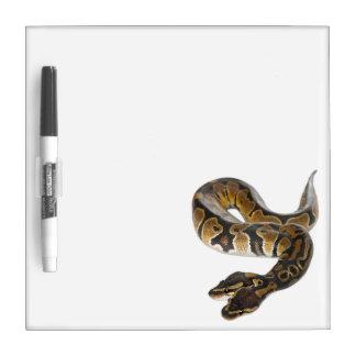 Two headed Royal Python or Ball Python - Python Dry Erase Board