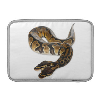 Two headed Royal Python or Ball Python - Python MacBook Air Sleeves