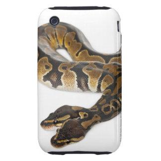 Two headed Royal Python or Ball Python - Python iPhone 3 Tough Cover