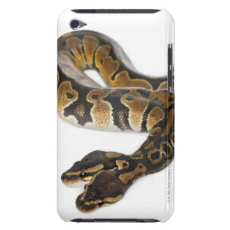 Two headed Royal Python or Ball Python - Python iPod Touch Cover