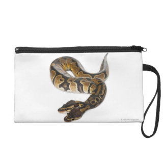 Two headed Royal Python or Ball Python - Python Wristlet