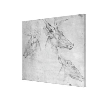 Two heads of stags, one head of a doe canvas print