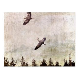Two Herons Flying Photo Postcard