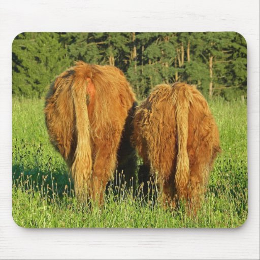 Two Highland Cattle Rears in Upper Austria Mouse Pad