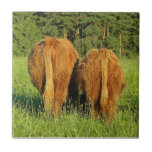 Two Highland Cattle Rears in Upper Austria Tiles