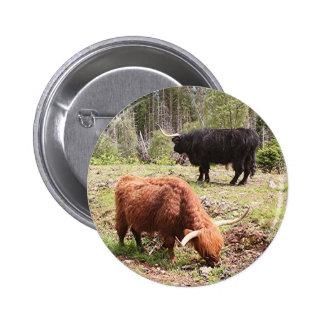 Two highland cattle, Scotland 2 Inch Round Button