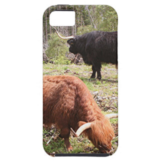 Two highland cattle, Scotland iPhone SE/5/5s Case