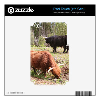 Two highland cattle, Scotland Skin For iPod Touch 4G
