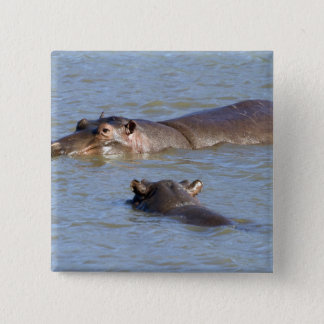 Two hippos in a river, Kruger National Park, Pinback Button