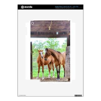 Two horse friends iPad 3 skin