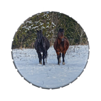 Two Horse Friends & Snowy Field Equine Photo Candy Tin