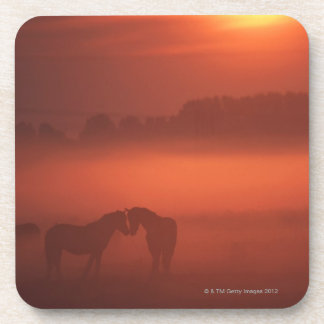 Two horses at sunset drink coaster
