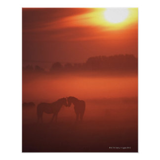 Two horses at sunset print