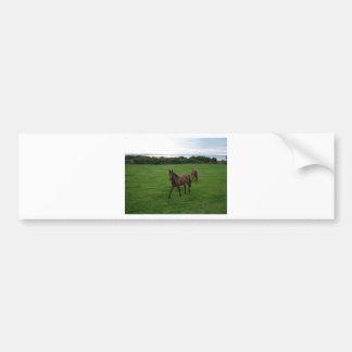 Two Horses Bumper Sticker