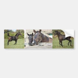 Two Horses Chewin a Fence Bumper Stickers