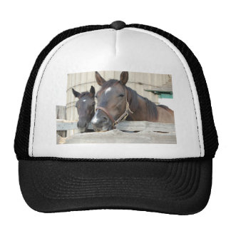 Two Horses Chewin a Fence Mesh Hats