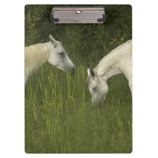 Two horses eating grass clipboard