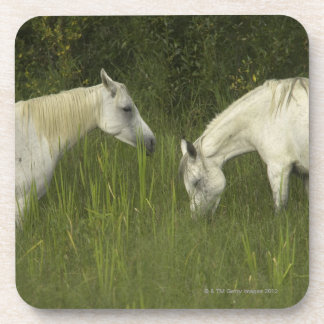Two horses eating grass drink coaster