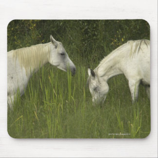 Two horses eating grass mousepads