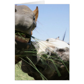 Two horses eating together greeting card