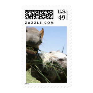Two horses eating together postage stamp