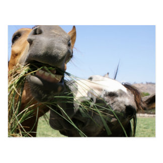 Two horses eating together postcard