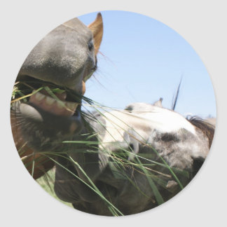 Two horses eating together classic round sticker