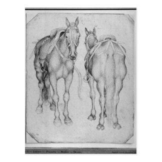 Two horses, from the The Vallardi Album Postcard