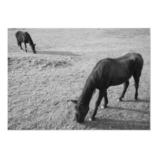 Two horses grazing card