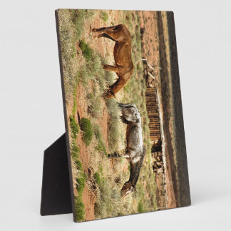 Two horses grazing, Monument Valley, UT Plaque