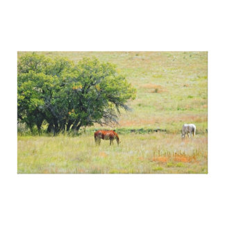 Two Horses in Field Stretched Canvas Print