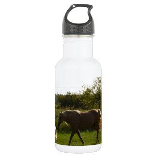 Two horses in open field 18oz water bottle
