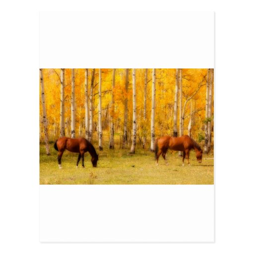 Two Horses in the Colorado Fall Foliage Postcards