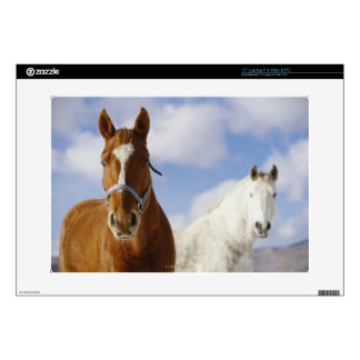 Two Horses Laptop Decal
