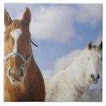 Two Horses Large Square Tile