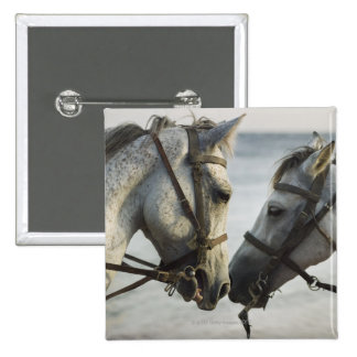 Two horses meeting. 2 inch square button