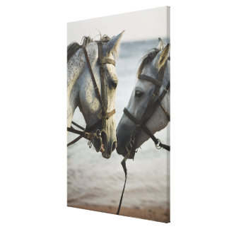 Two horses meeting. canvas print
