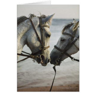 Two horses meeting. card