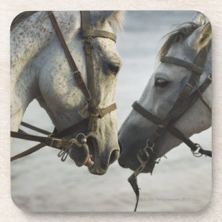 Two horses meeting. coasters