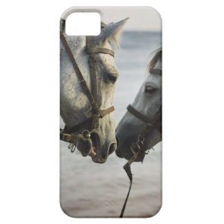 Two horses meeting. iPhone SE/5/5s case