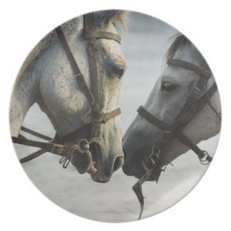 Two horses meeting. plates
