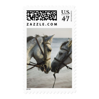 Two horses meeting. postage