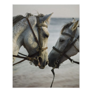 Two horses meeting. poster