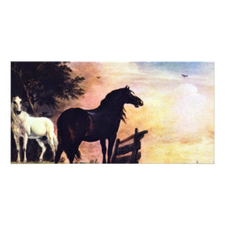 Two Horses Near A Gate In The Meadow [1]. Photo Greeting Card