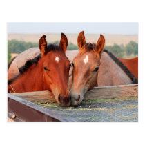 Two Horses on a Farm Postcard