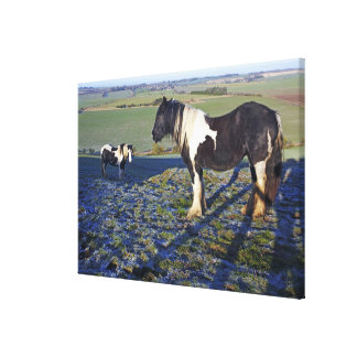 Two horses on Hackpen hill in North Wiltshire Canvas Print