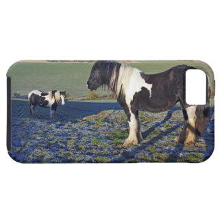 Two horses on Hackpen hill in North Wiltshire iPhone 5 Covers