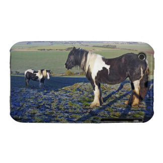 Two horses on Hackpen hill in North Wiltshire Case-Mate iPhone 3 Cases
